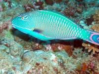 Diving Palau 08