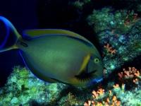 Diving Palau 09