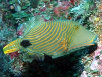 Diving Palau 10
