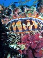 Diving Palau 11