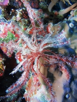 Diving Palau 13