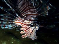 Diving Palau 15
