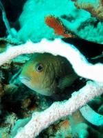 Diving Palau 17