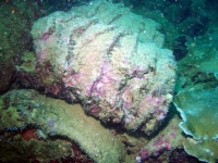 Diving Palau 20
