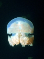Diving Palau 22