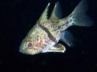 Diving Palau 23