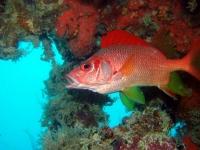Diving Palau 24