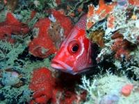 Diving Palau 25