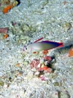 Diving Palau 26