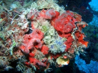 Diving Palau 27