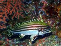 Diving Palau 28