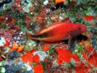 Diving Palau 29