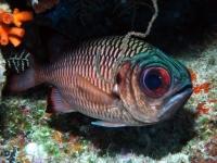 Diving Palau 31
