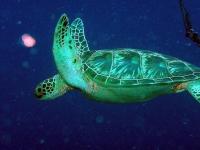 Diving Palau 33