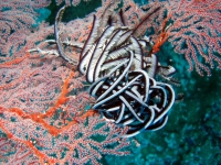 Diving Palau 34