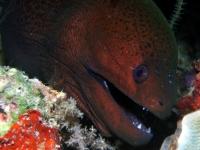 Diving Palau 35