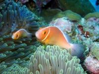 Diving Palau 36