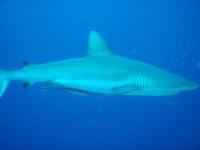 Diving Palau 37
