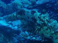 Diving Palau 38