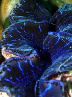 Diving Palau 39