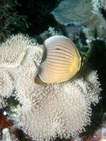 Diving Palau 40
