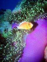 Diving Palau 42