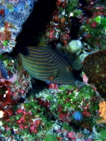 Diving Palau 43
