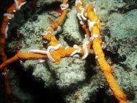 Diving Palau 45