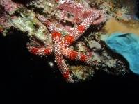 Diving Palau 46