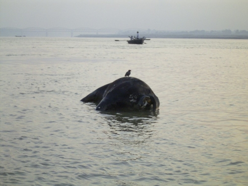 Life On The Ganges 12