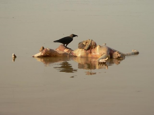 Life On The Ganges 18