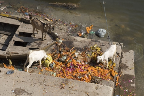Life On The Ganges 25