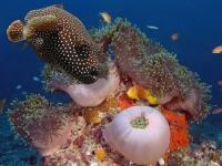 Stunning_underwater_01
