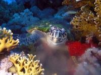 Stunning_underwater_03