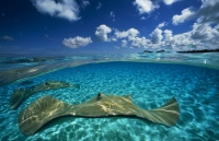 Stunning_underwater_04