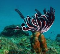 Stunning_underwater_05