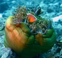 Stunning_underwater_06