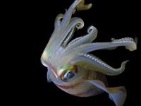 Stunning_underwater_07