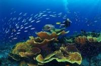 Stunning_underwater_08