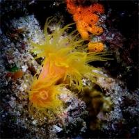 Stunning_underwater_09
