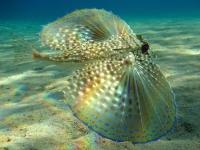 Stunning_underwater_10
