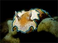 Stunning_underwater_11