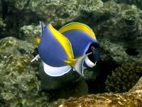 Stunning_underwater_13