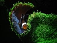 Stunning_underwater_14