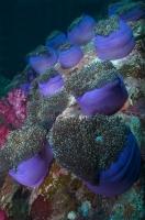 Stunning_underwater_15