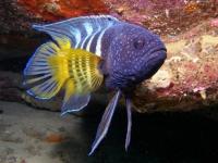Stunning_underwater_16