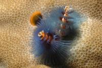 Stunning_underwater_19