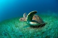 Stunning_underwater_20