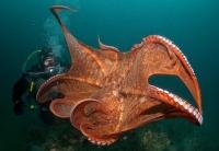 Stunning_underwater_21