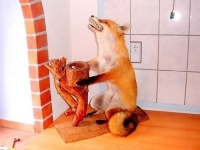 Taxidermy Gone Crazy 04